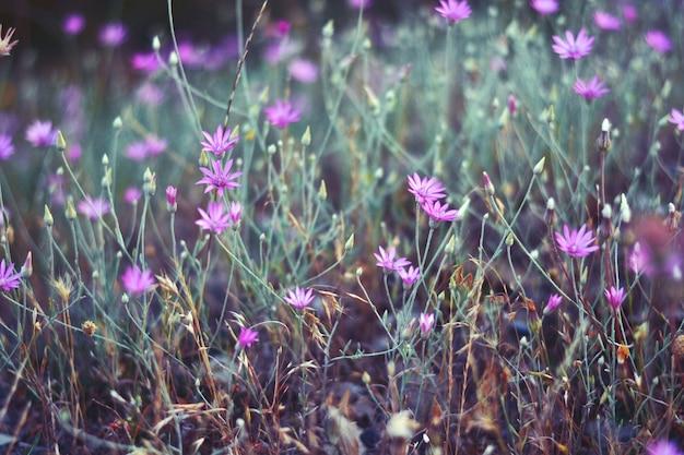 Paarse weide bloemen