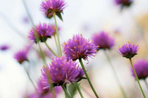 Paarse wilde bloemen met natuurlijke schoonheid.