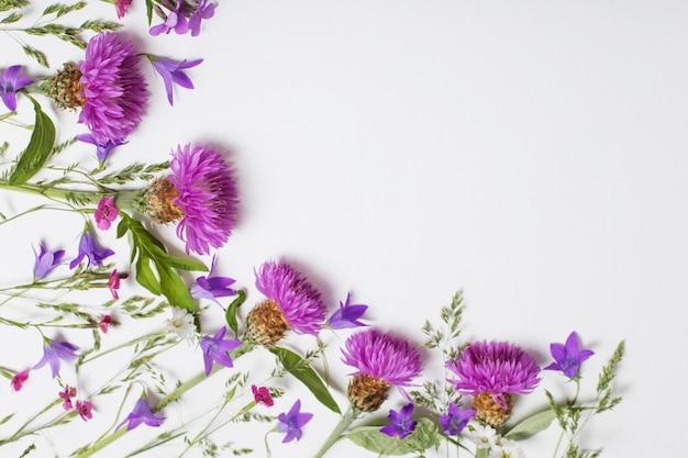 Paarse zomerbloemen op witte achtergrond