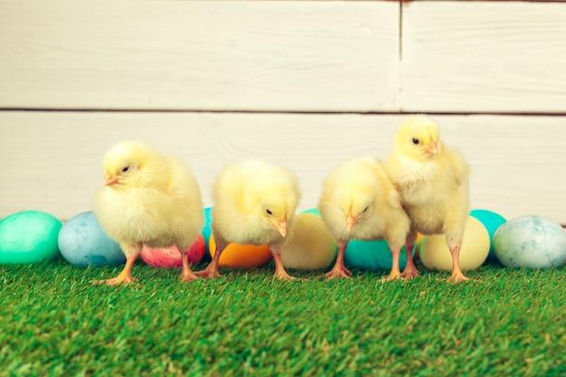 Paaseieren en kippen op groen gras