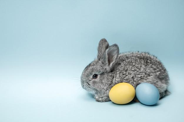 Paashaas konijn met beschilderde eieren op blauwe achtergrond. paasvakantie concept.
