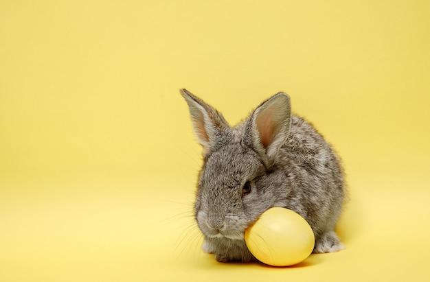 Paashaaskonijn met geschilderd ei op gele achtergrond. pasen, dier, lente, feest en vakantieconcept.