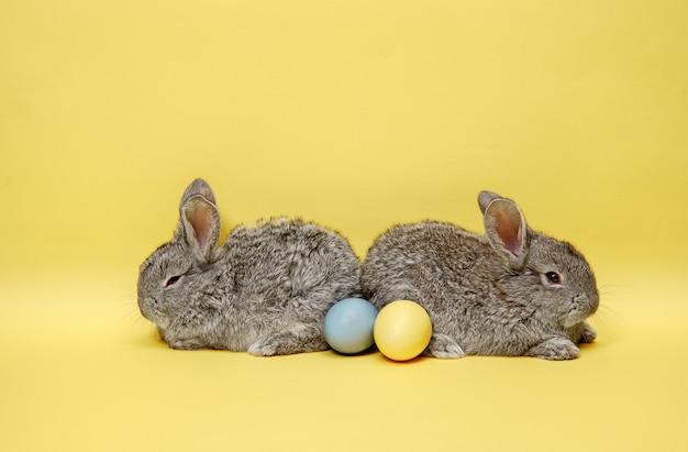 Paashaaskonijnen met beschilderde eieren op gele achtergrond. pasen, dier, lente, feest en vakantieconcept.