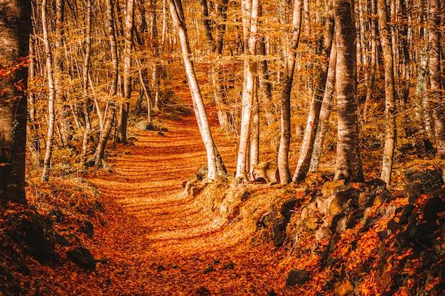 Pad binnen een bos in de herfst