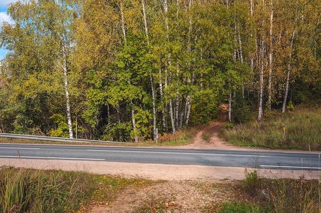 Pad dat in de herfst naar het bos leidt. reizende achtergrond. asfaltweg die door het bos gaat. letland. baltisch.