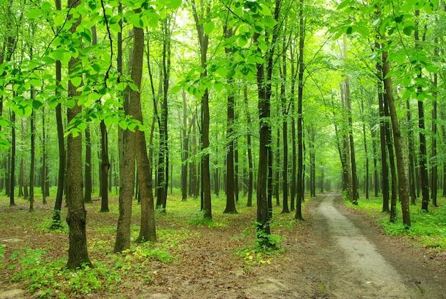 Pad door de bosbomen