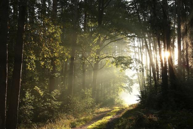 Pad door een herfstbos op een mistige zonnige ochtend