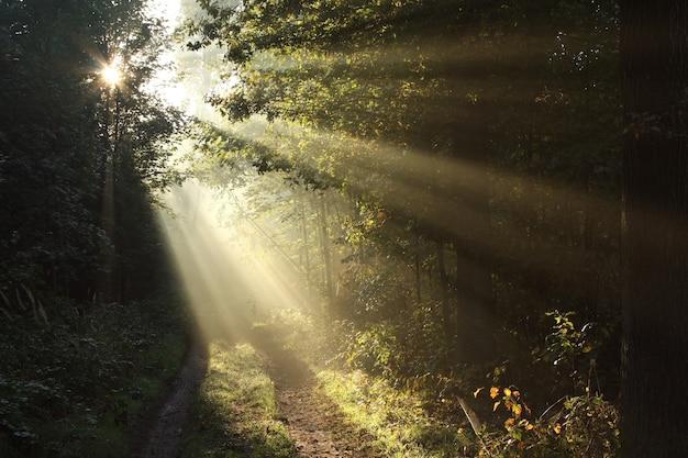 Pad door een mistig herfstbos bij zonsopgang