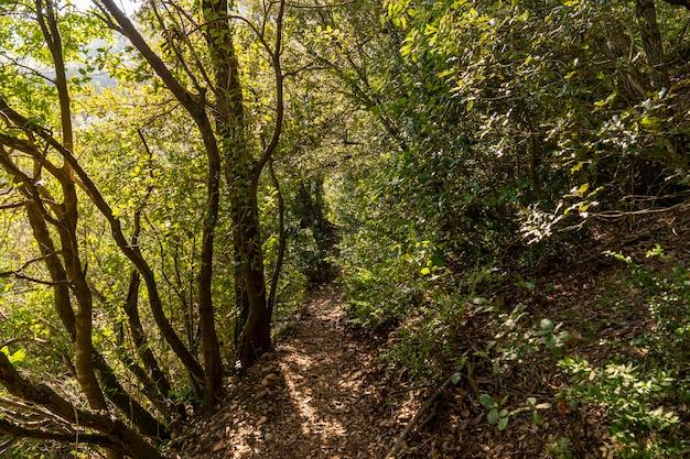 Pad door het bos in natuurpark