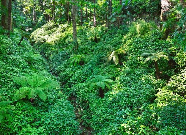 Pad door het bos van het zomerse stadspark met subtropische planten