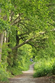 Pad en hoge bomen in het bos