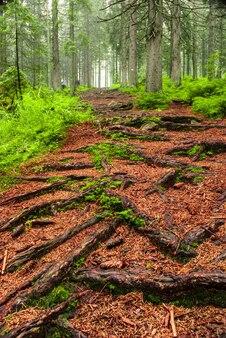Pad in dromerig groen bos, sprookjeslandschap