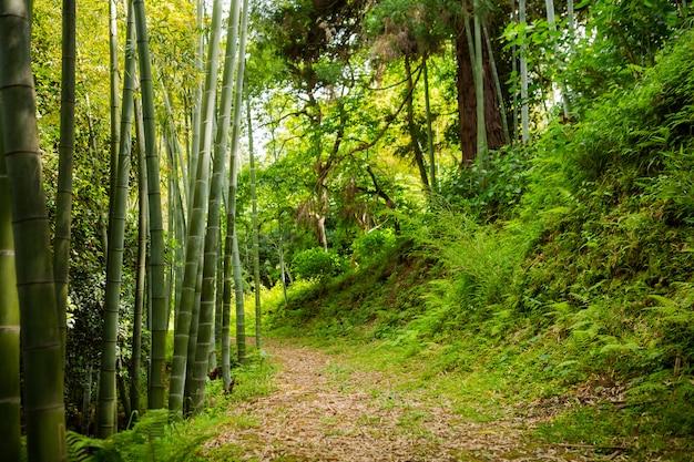 Pad in een bamboebosje in de zomer