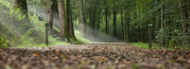 Pad in een bos in de herfst en lichtstralen door de bomen. landschap van het baskenland in de stad aia