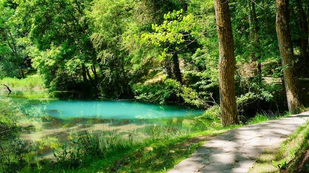 Pad in het betoverde bos met rivier en weelderige vegetatie