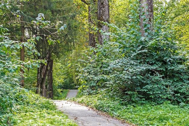 Pad in het bos of park. boom steegje