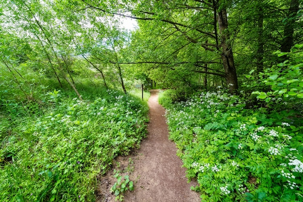 Pad in het bos tussen witte bloemen en weelderige groene planten in het voorjaar. romantisch tafereel. duratãƒâ³n rivier, segovia. spanje.