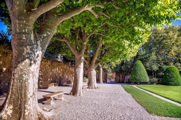 Pad in het park met oude platanenbomen in een zomerdag stad aixenprovence frankrijk