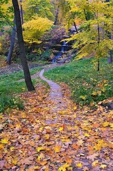 Pad naar de waterval. gouden herfst in het park