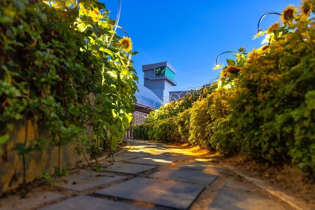 Pad naar uitkijktoren van de luchthaven de weg door de tuin met zonnebloemen zonsopkomst