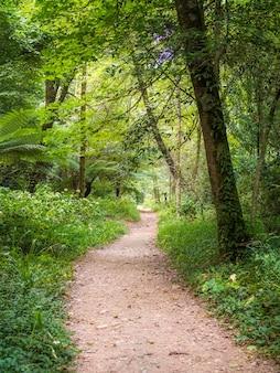 Pad onder een bladerdak van bosbomen omgeven door grassen en bomen in serra do bucaco, portugal