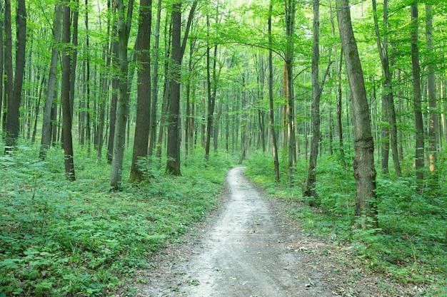 Pad op een groen bos