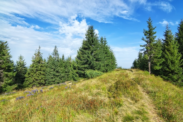 Pad traject midden van het bos en groen gras. karpatische bergen.