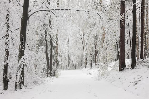 Pad tussen berijpte bomen in het bos op een zonnige winterochtend