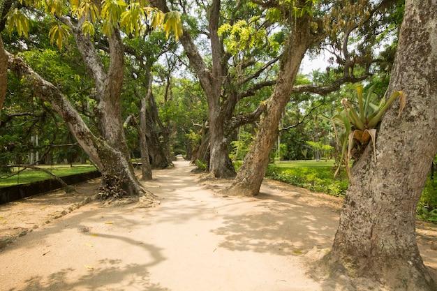 Pad tussen bomen in de botanische tuin in rio de janeiro, brazilië.