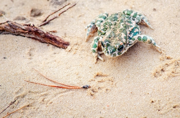 Pad zit op een zand en wacht