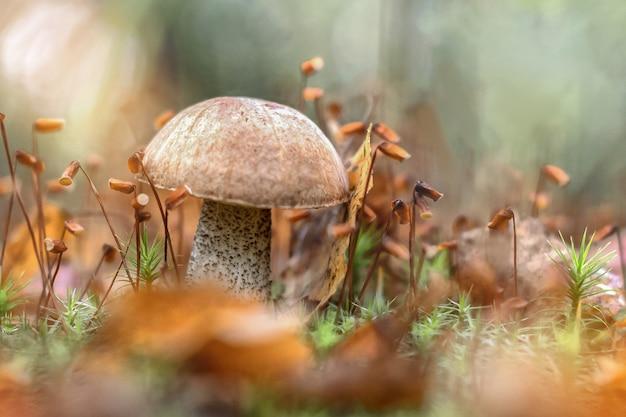 Paddestoel groeit in het bos tussen gevallen bladeren en mos