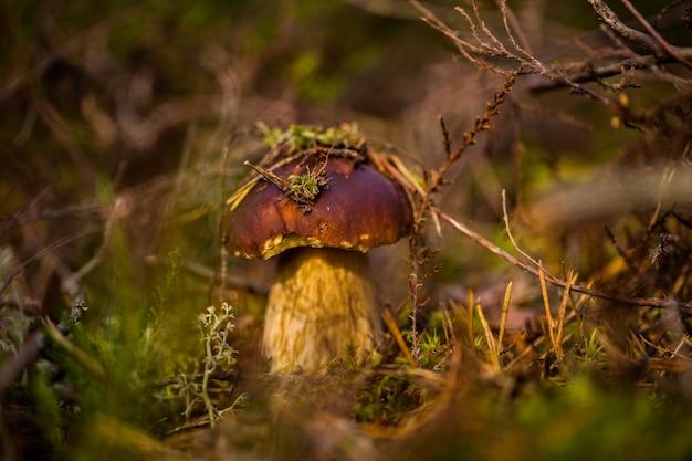 Paddestoel in het mos in het bos