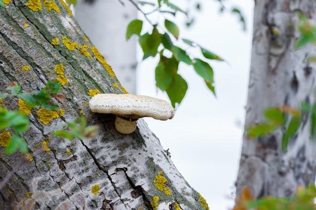 Paddestoel op een gebroken boom