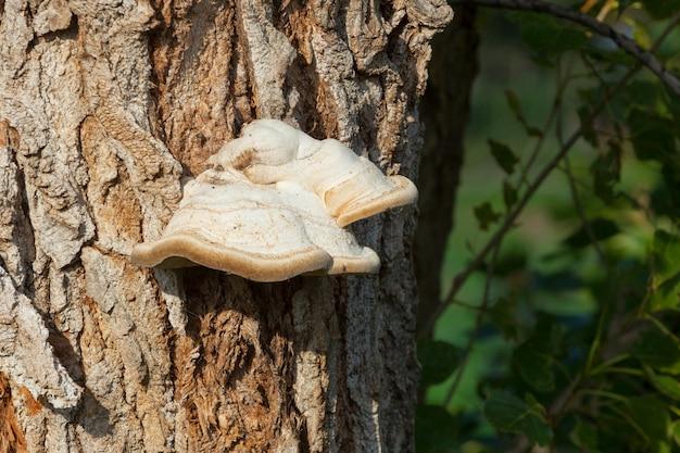Paddestoelen aan de boom