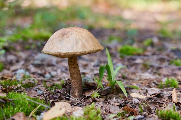 Paddestoelen groeien in herfst bos