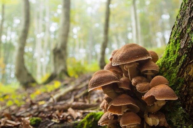 Paddestoelen op boomstam. herfst landschap. bruine champignons