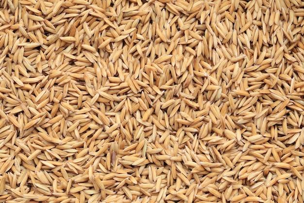 Paddy die van rijstachtergrond wordt gedroogd.