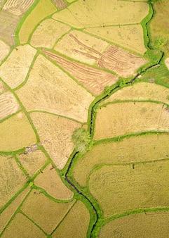 Paddy plant plantation flat lay airscape