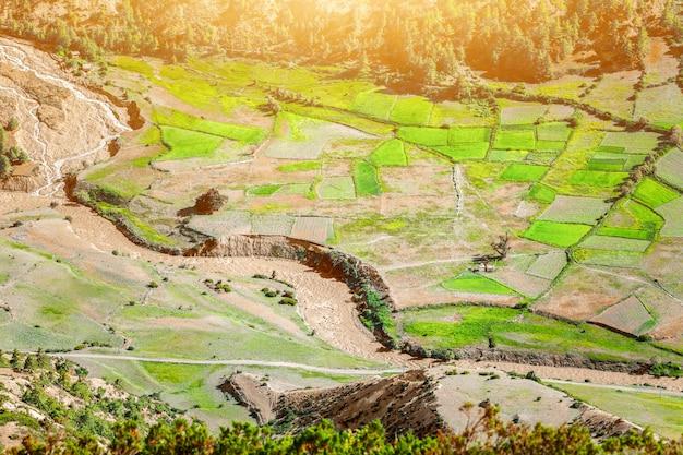 Padievelden in nepal. natuur concept