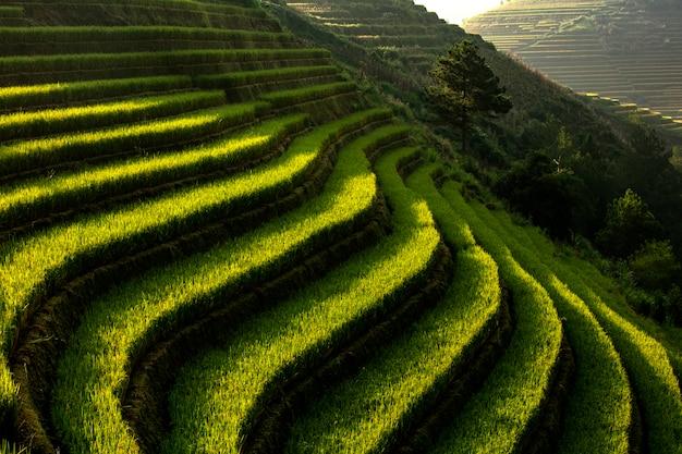 Padievelden, stappen in cai cai van bergenmu, yenbai, vietnam.