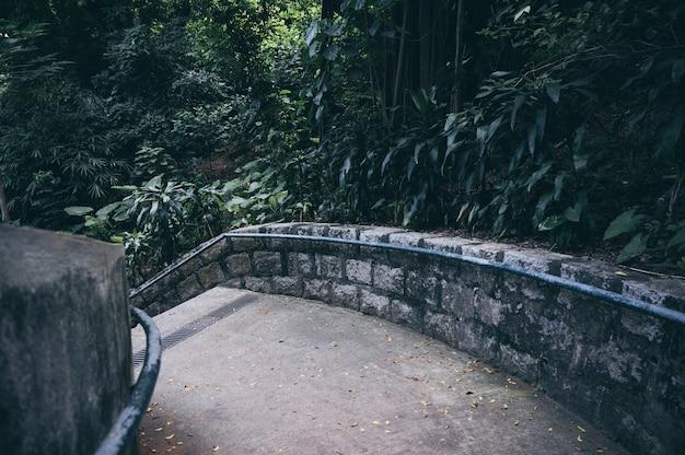 Padweg door het herfst bos natuurlijke manierconcept