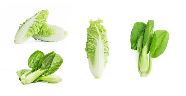 Paksoi groente die op de witte achtergrond.