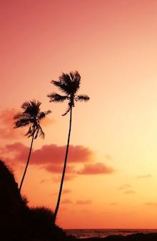 Palm bij zonsondergang op zeekust