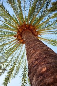 Palm dichte omhooggaand op blauwe hemel
