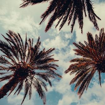 Palm en blauwe lucht. palm beach mode-achtergrond