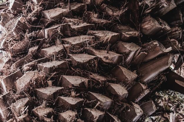 Palm exotische tropische textuur