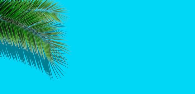 Palm laat achtergrond. tropische palmbladeren op een lege gekleurde achtergrond