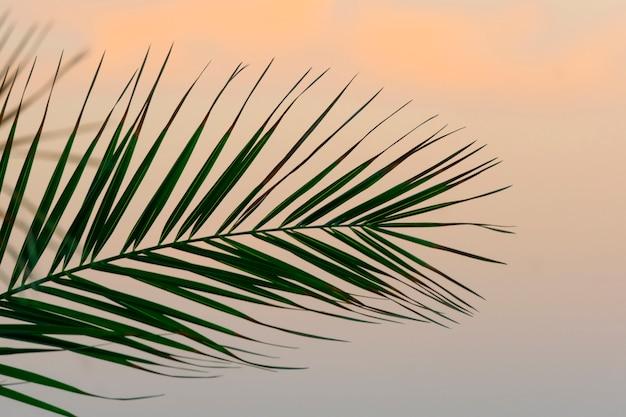 Palm laat achtergrond