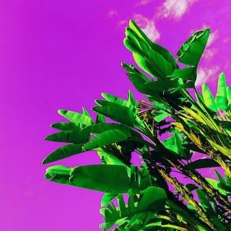 Palm op paarse lucht. kleur kunstontwerp minimaal