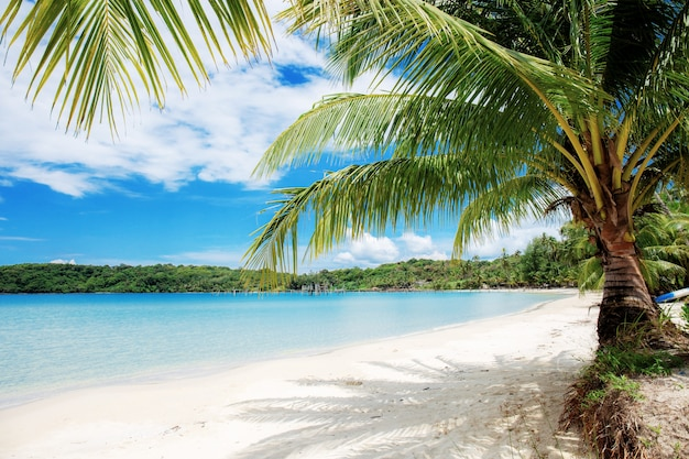 Palm op zee.